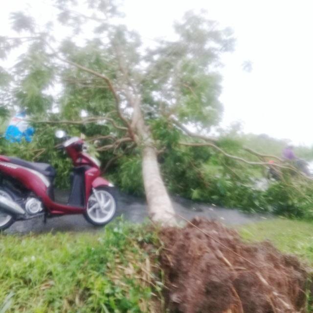 Cà Mau: Thủy triều dâng cao, sóng lớn gây sạt lở nghiêm trọng đê biển  - 8