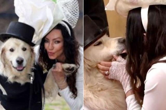 Người mẫu Anh làm đám cưới với thú cưng sau 220 lần hẹn hò thất bại - 1