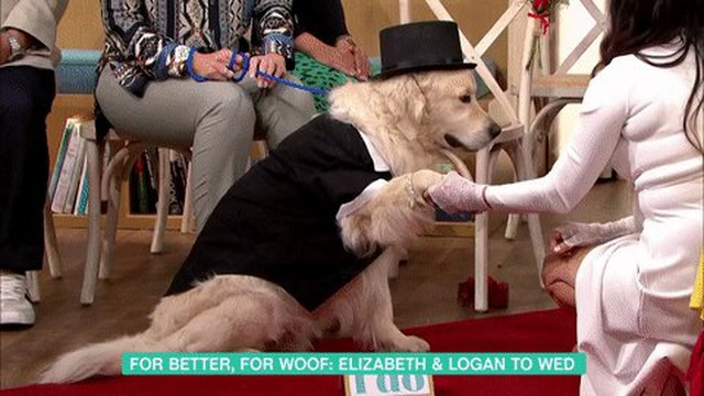 Người mẫu Anh làm đám cưới với thú cưng sau 220 lần hẹn hò thất bại - 2