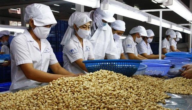 Nhập hạt điều để xuất khẩu: Doanh nghiệp Việt lãi hơn 13 triệu đồng/tấn - 1