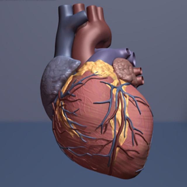 Phương pháp ghép tế bào gốc mới có thể giúp phục hồi tim bị tổn thương - 1