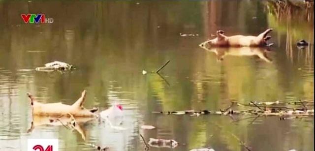 Nghệ An: Tiếp tục lấy nước sông Đào cấp cho người dân sử dụng - 2