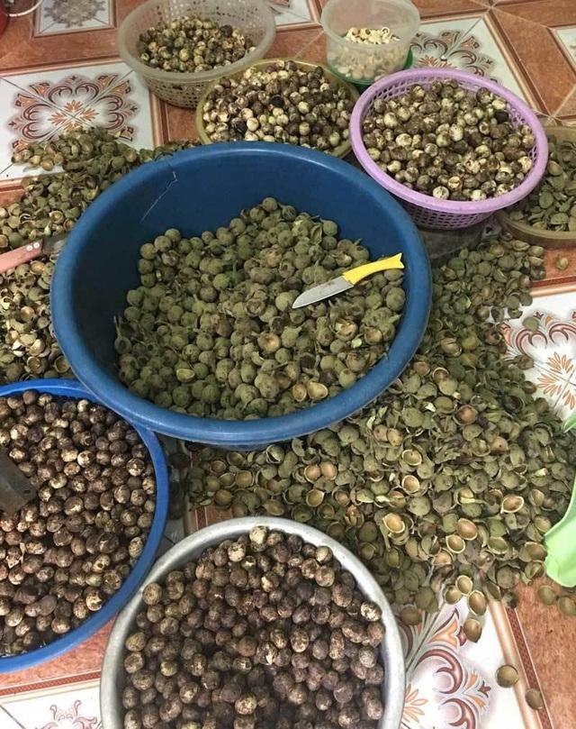 Quả rừng lạ về Hà Thành, đặc sản màu đen nấu bát canh mất 1 tiếng - 3