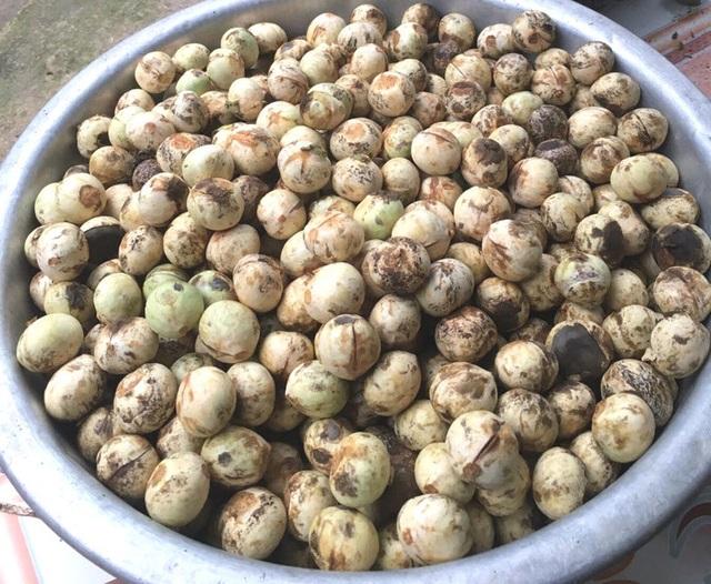 Quả rừng lạ về Hà Thành, đặc sản màu đen nấu bát canh mất 1 tiếng - 4