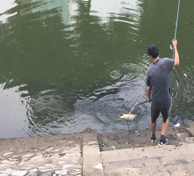 Dân câu kiếm cá sông Tô Lịch dễ như đi chơi - 3