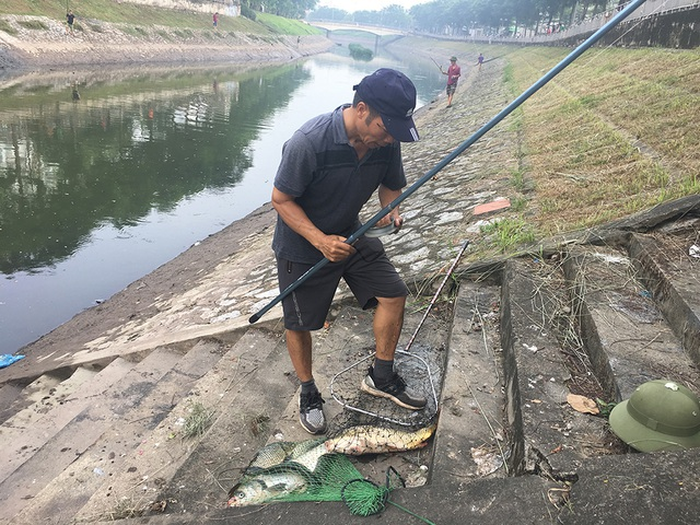 Dân câu kiếm cá sông Tô Lịch dễ như đi chơi - 7