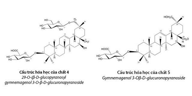 Công bố 2 hoạt chất mới giúp hạ đường huyết mạnh trong Dây thìa canh Việt Nam - 2