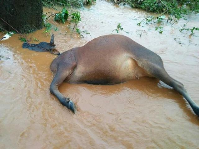 Một gia đình 3 người bị vùi lấp sau trận mưa lụt lịch sử - 2