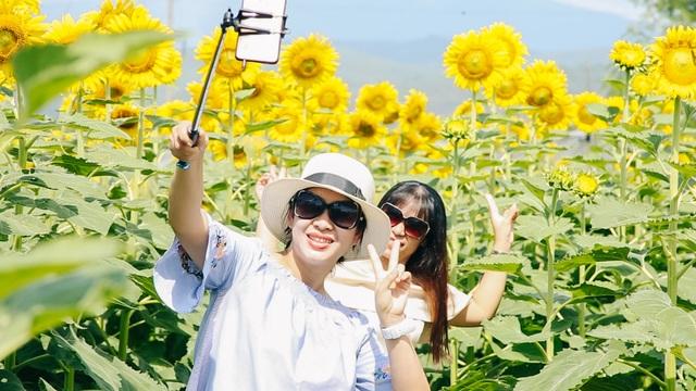 """Giới trẻ rủ nhau """"check-in"""" vườn hoa hướng dương ở Đà Nẵng - 3"""
