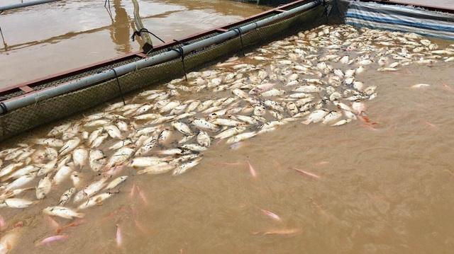 Nước lũ dâng cao, 1 người mất tích, hơn 700 hộ dân sơ tán - 4