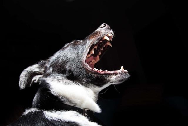 Những mối nguy hiểm đối với sức khỏe khi bị chó cắn hoặc liếm - 1