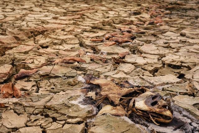 Nhiều hồ đập khô cạn chưa từng thấy do cái nóng 40 độ ròng rã nhiều tháng - 6