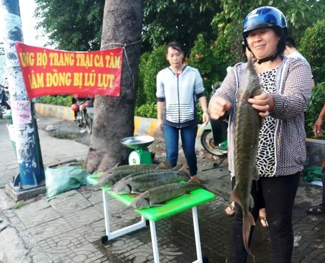 """Dân TPHCM """"đổ xô"""" mua cá tầm 100.000 đồng/kg ủng hộ người nuôi cá vùng lũ - 1"""
