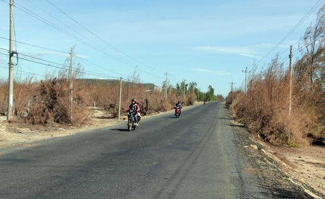 Hàng trăm ha rừng phòng hộ chết khô vì nắng hạn - 1