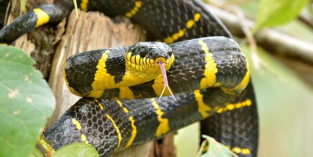 Vườn thú để rắn độc xổng chuồng tẩu thoát - 2
