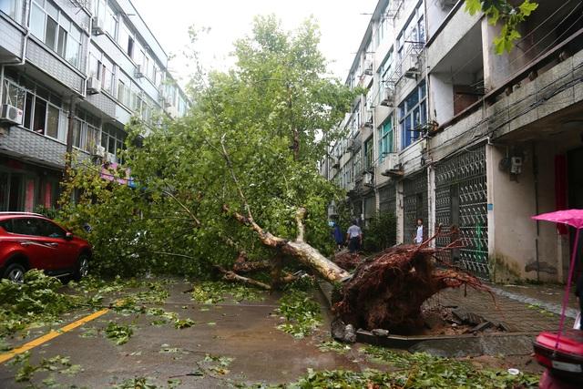 Siêu bão Lekima đổ bộ Trung Quốc: 44 người chết, 16 người mất tích - 11