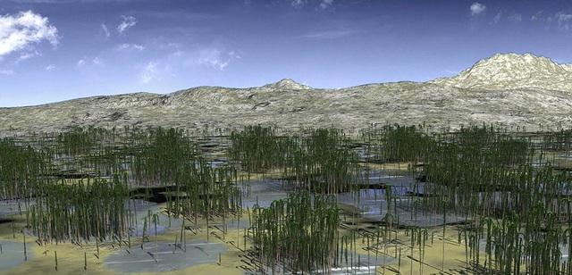 Phát hiện khu rừng hóa thạch 419 triệu năm tuổi ở Trung Quốc - 1