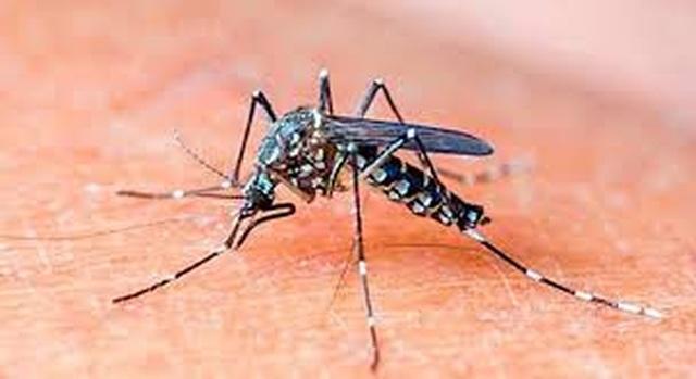 Những nơi trú ngụ ưa thích của muỗi vằn gây sốt xuất huyết - 1