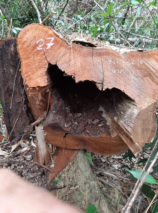 Rừng nguyên sinh Vườn quốc gia Pù Mát bị xâm hại - 6