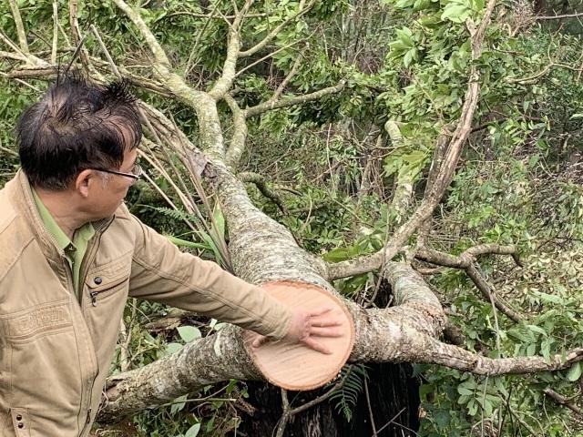 Bắt quả tang 11 đối tượng cưa hạ rừng trái phép - 4