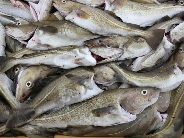 Biến đổi khí hậu có thể khiến thủy ngân độc hại tích tụ trong hải sản - 1
