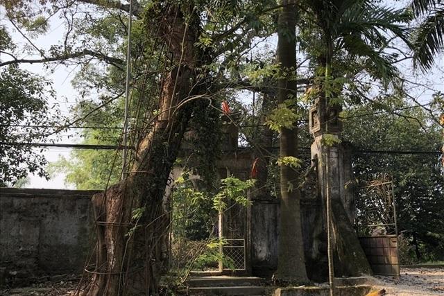 Thông tin mới nhất về phiên đấu giá gỗ sưa trăm tỉ ở Hà Nội - 1