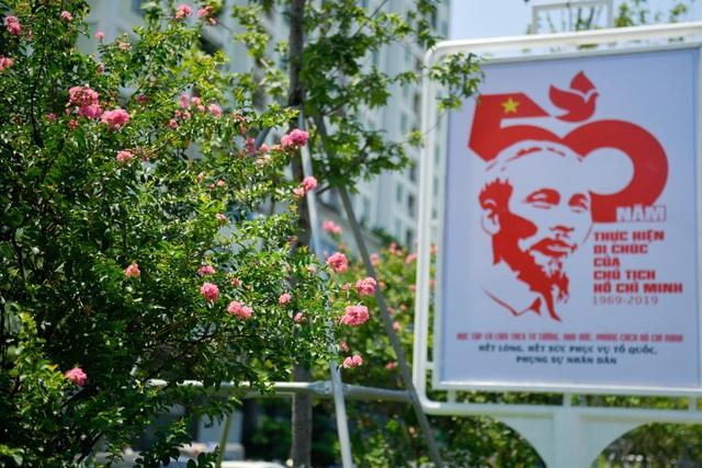 Con đường hoa tường vi nở hồng lãng mạn ở Hà Nội - 7