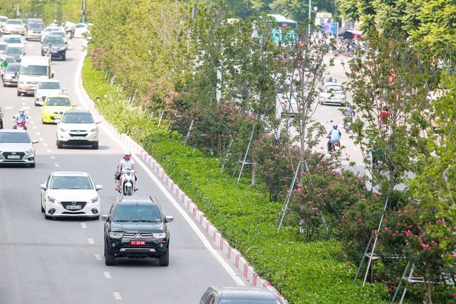 Con đường hoa tường vi nở hồng lãng mạn ở Hà Nội - 1