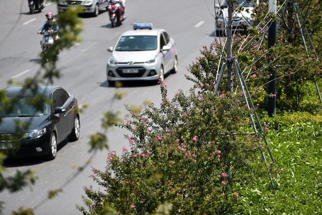 Con đường hoa tường vi nở hồng lãng mạn ở Hà Nội - 4