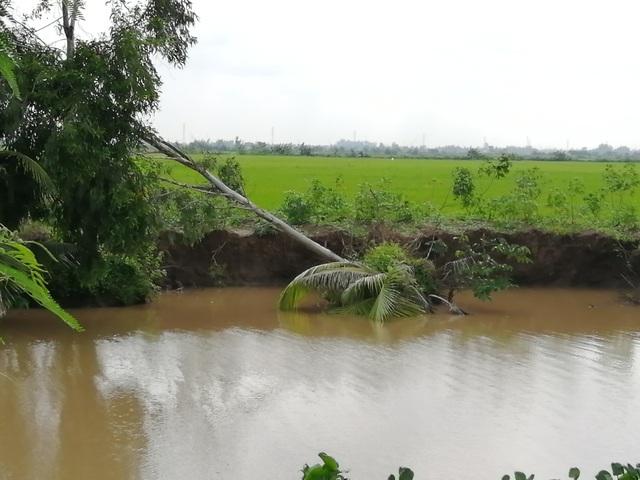 """Sạt lở ở Bạc Liêu: """"Tan nát"""" bờ kênh quê! - 6"""