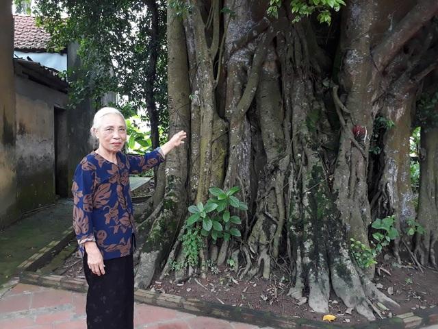 Khách thập phương đổ về chiêm ngưỡng cây đa - gạokỳ lạở Vĩnh Phúc - 1