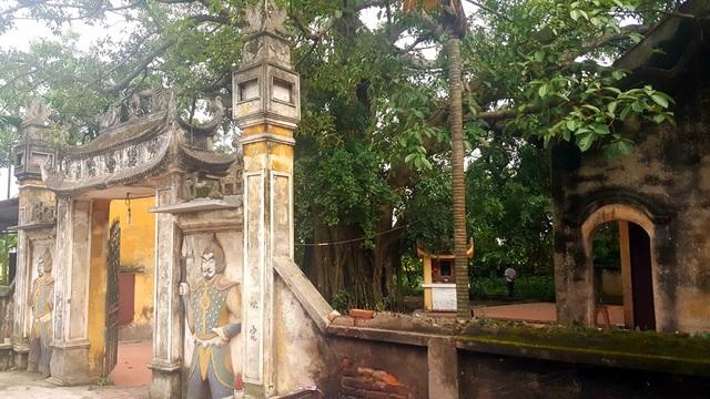 Khách thập phương đổ về chiêm ngưỡng cây đa - gạokỳ lạở Vĩnh Phúc - 3