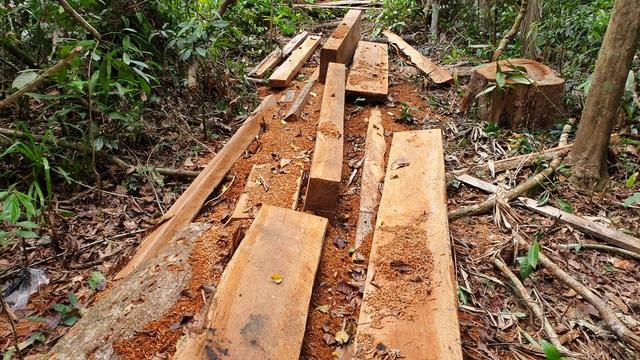 Phá rừng tại huyện Bắc Trà My