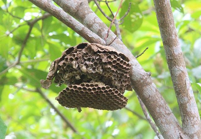 """Thuần phục ong """"tử thần"""", 8X miền núi kiếm gần trăm triệu đồng mỗi năm - 4"""