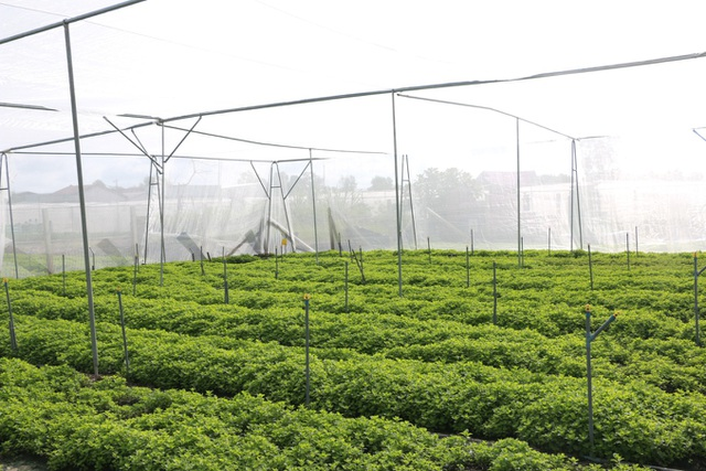 Tập đoàn Minh Hưng đồng hành cùng nhà nông phát triển sản xuất rau an toàn - 1