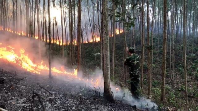 Khởi tố người đàn ông vô tình gây ra vụ cháy rừng thiệt hại 149,6ha - 1