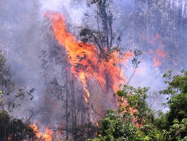 Cháy 3ha rừng trồng, uy hiếp nhiều nhà dân - 1