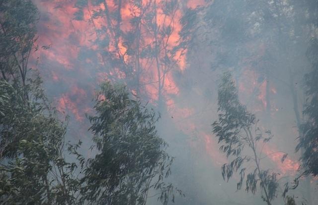 Cháy 3ha rừng trồng, uy hiếp nhiều nhà dân - 4