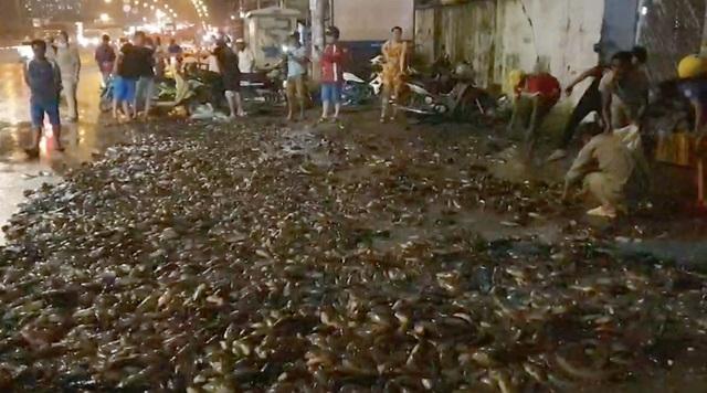 Hơn 100 người giúp tài xế gom 2,7 tấn cá bị đổ tràn trên quốc lộ - 1