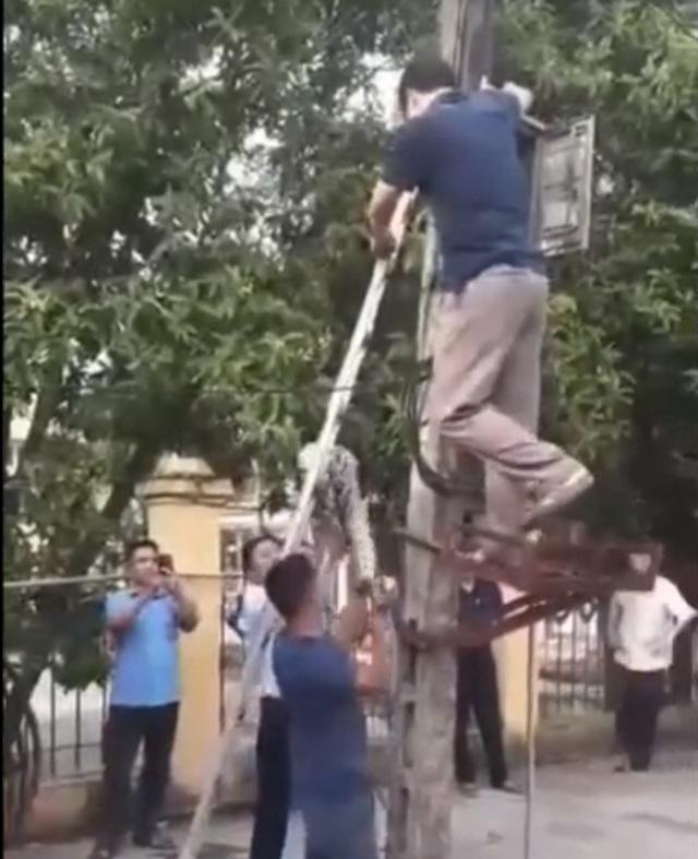 Trăn 'khủng' vắt vẻo trên cột điện ở Phú Thọ đã bị người dân làm thịt - 1