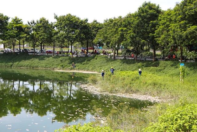 Hà Nội: Cá chết hàng loạt bốc mùi nồng nặc ở hồ Yên Sở - 7