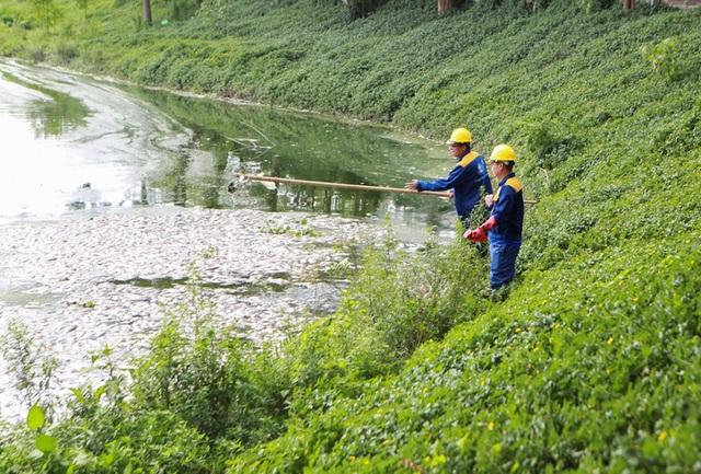 Hà Nội: Cá chết hàng loạt bốc mùi nồng nặc ở hồ Yên Sở - 8