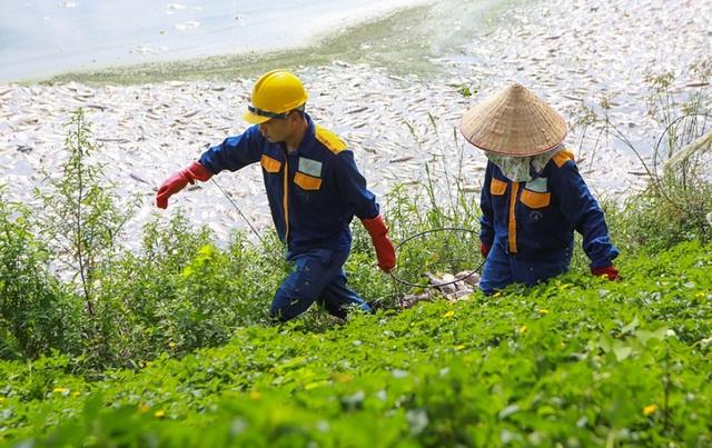 Hà Nội: Cá chết hàng loạt bốc mùi nồng nặc ở hồ Yên Sở - 9