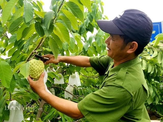 Cận cảnh giống na cho trái khủng, thu mỗi vụ trung bình 1 triệu đồng/cây - 8
