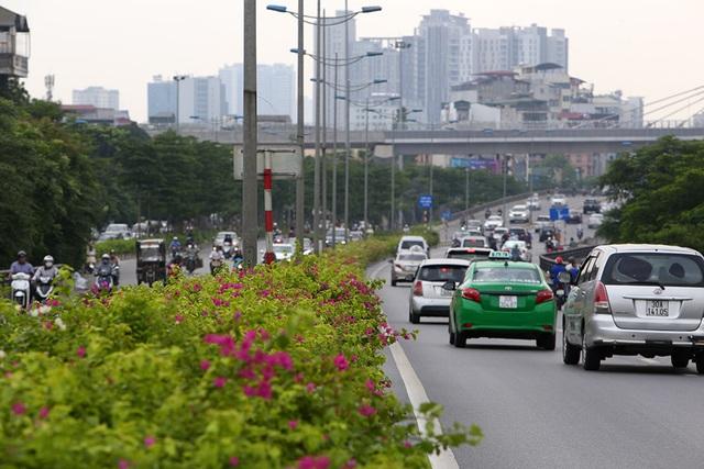 Con đường hoa giấy hiếm có ở Hà Nội - 1