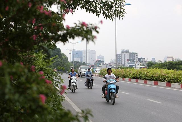 Con đường hoa giấy hiếm có ở Hà Nội - 12