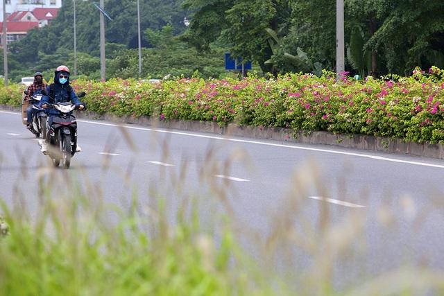 Con đường hoa giấy hiếm có ở Hà Nội - 4