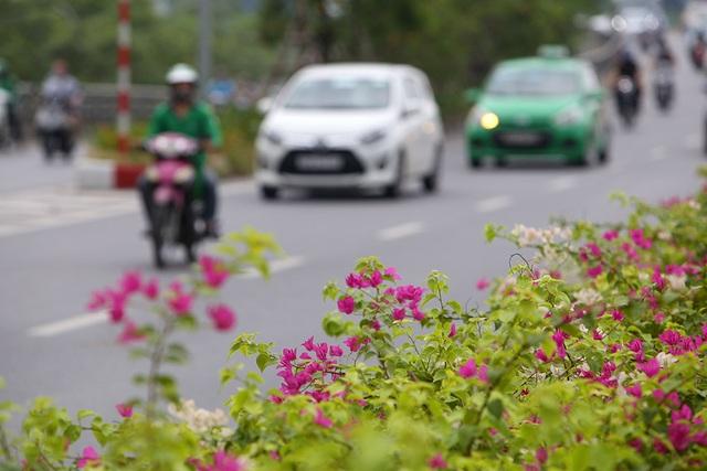 Con đường hoa giấy hiếm có ở Hà Nội - 5