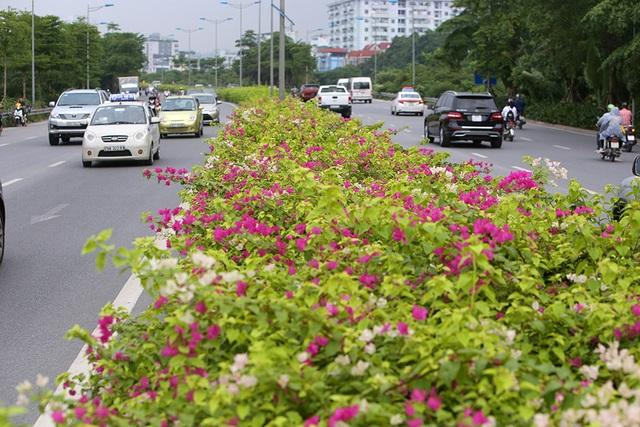 Con đường hoa giấy hiếm có ở Hà Nội - 7