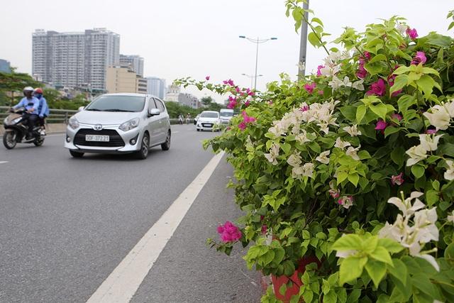 Con đường hoa giấy hiếm có ở Hà Nội - 9